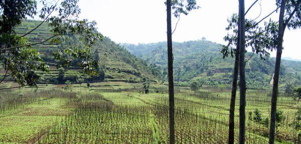 Paisaje de Ruanda. Foto: Pixabay.