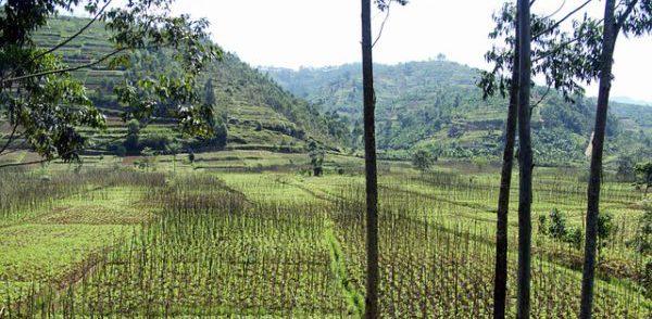 Paisaje de Ruanda. Foto: Pixabay.com.