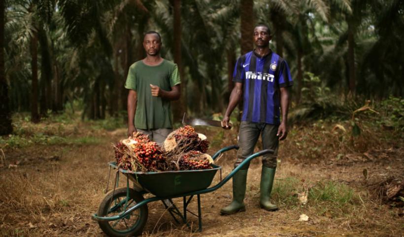 Trabajadores de las plantaciones de SOCFIN en Camerún. Foto: Micha Patault (recuperada por Farmlangrab).